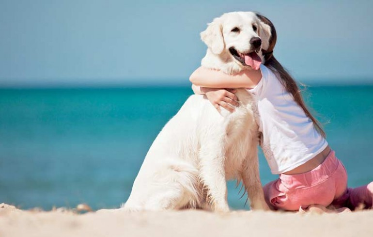 Dog friendly beaches in the Conero Riviera